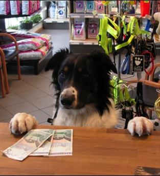 Hund som betalar