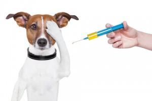 Bildresultat för vaccinering hund bild